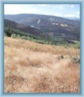 Sight of Orlík ridge from Bishop mount