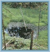 Nature at peat-bog Na Skřítku