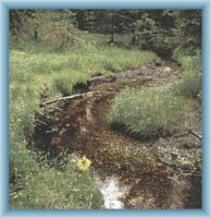 Žlutý brook near peat-bog Na Skřítku