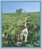 Source of river Moravice in reserve Velká kotlina