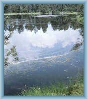 Lake Velké mechové jezírko in reserve Rejvíz