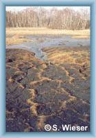 Peat-bogs Soos