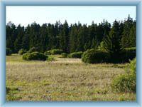 Upolínová meadow