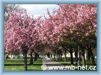 Mladá Boleslav - Park