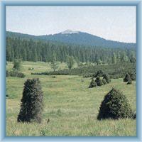 Meadow unter the mountain Luzný