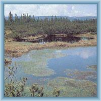 Lake in peat-bog Mlynářská slať