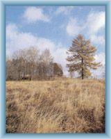 Peat-bog Novosvětská slať